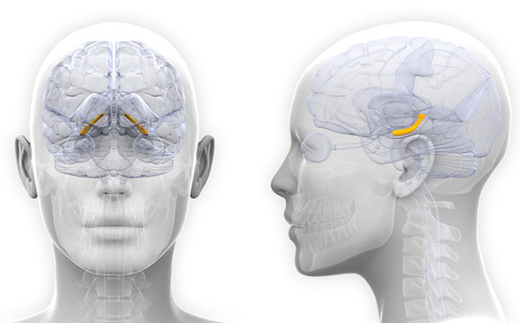 Study Shows Female Brains Change in Sync with Hormones