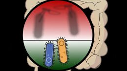 Study Shows Friendly Bacteria Aggressively Protect Their Territory