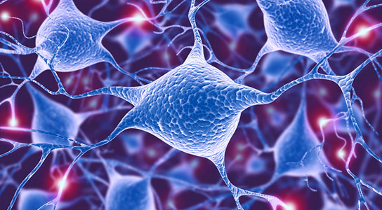 Study Shows Hunger Neurons also Control Compulsive Behaviors