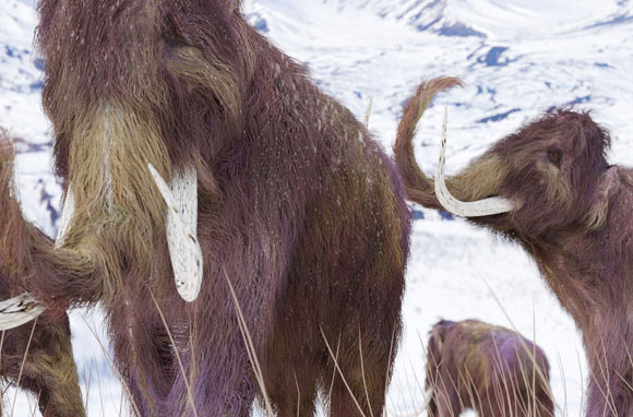 Study Shows Mammoths Killed by Abrupt Climate Change