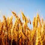 Study Shows Quality and Quantity of Crops is Changing
