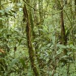 Study Shows Tropical Forests Absorbing More Carbon Dioxide