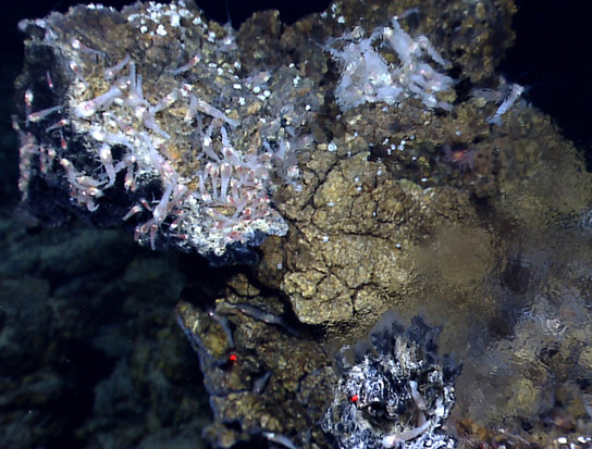 New Research Tests Theory that Life Originated at Deep Sea Vents