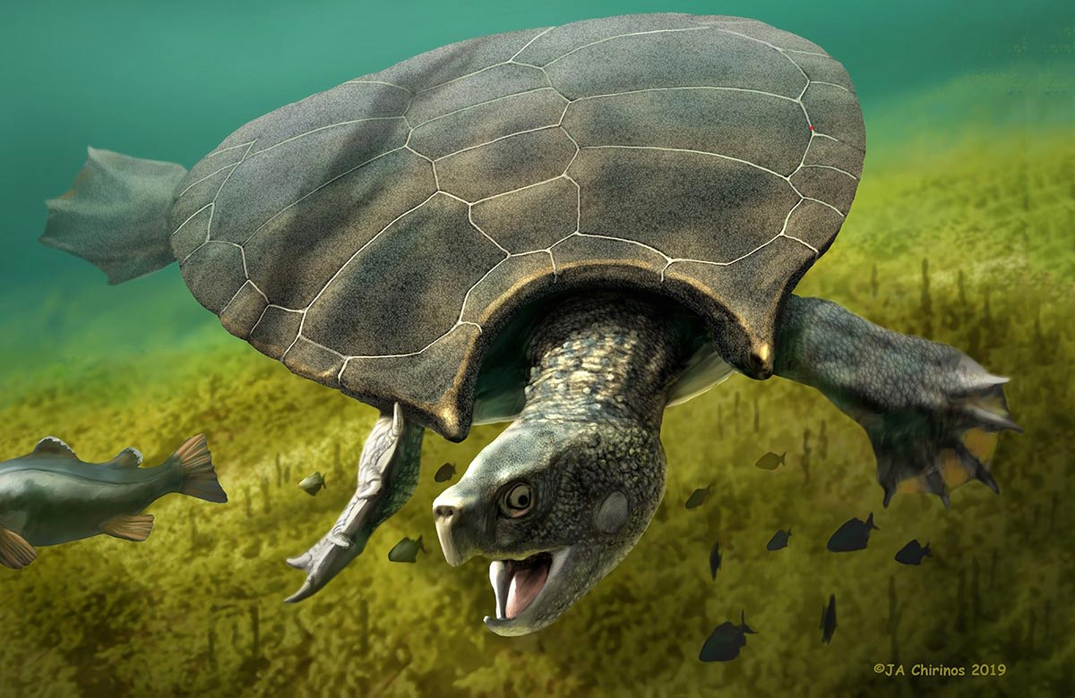 Absolutely Massive Extinct Turtle Weighed 2,500 Pounds and Had Giant Horned Shell - SciTechDaily