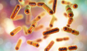 Sugar Targets Gut Microbe Linked to Lean and Healthy People