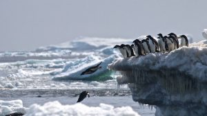 "Previously Unknown ""Supercolony"" of Adelie Penguins Discovered in Antarctica"