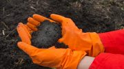 Synthetic Chemicals in Soils Concept
