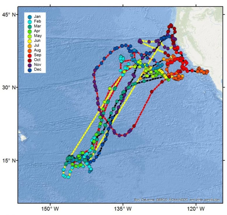 Tagged Shark Travels