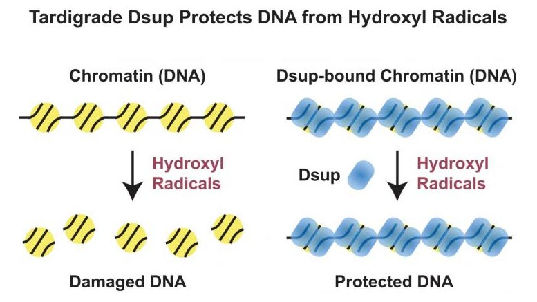 Tardigrade Dsup Protection Graphic
