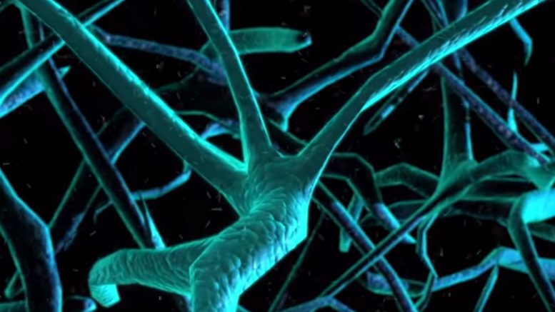 Test for Alzheimer's Disease Directly Measures Synaptic Loss