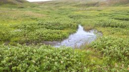 The Arctic Carbon Cycle is Speeding Up