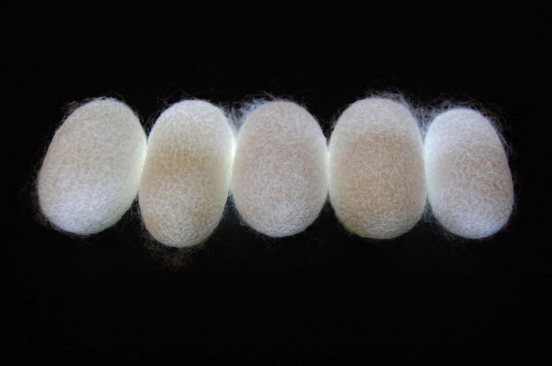 These Silk Fibers Are A High-Tech Natural Metamaterial