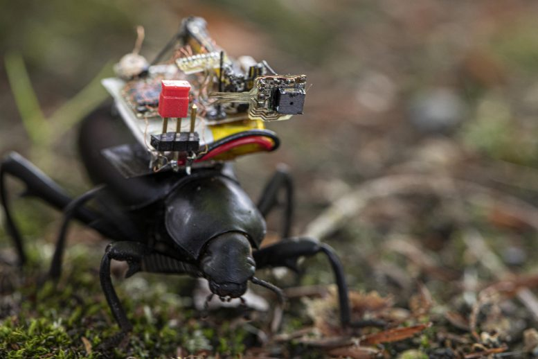 Tiny Camera for Insect