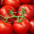 Tomato genome sequenced