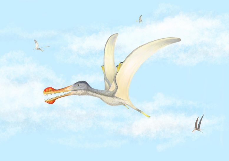 Toothed Pterosaur