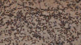 Trapped Ants Polish Nuclear Weapon Bunker