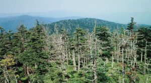 Trees Are A Culprit When It Comes To Acid Rain