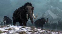 Trio of Woolly Mammoths