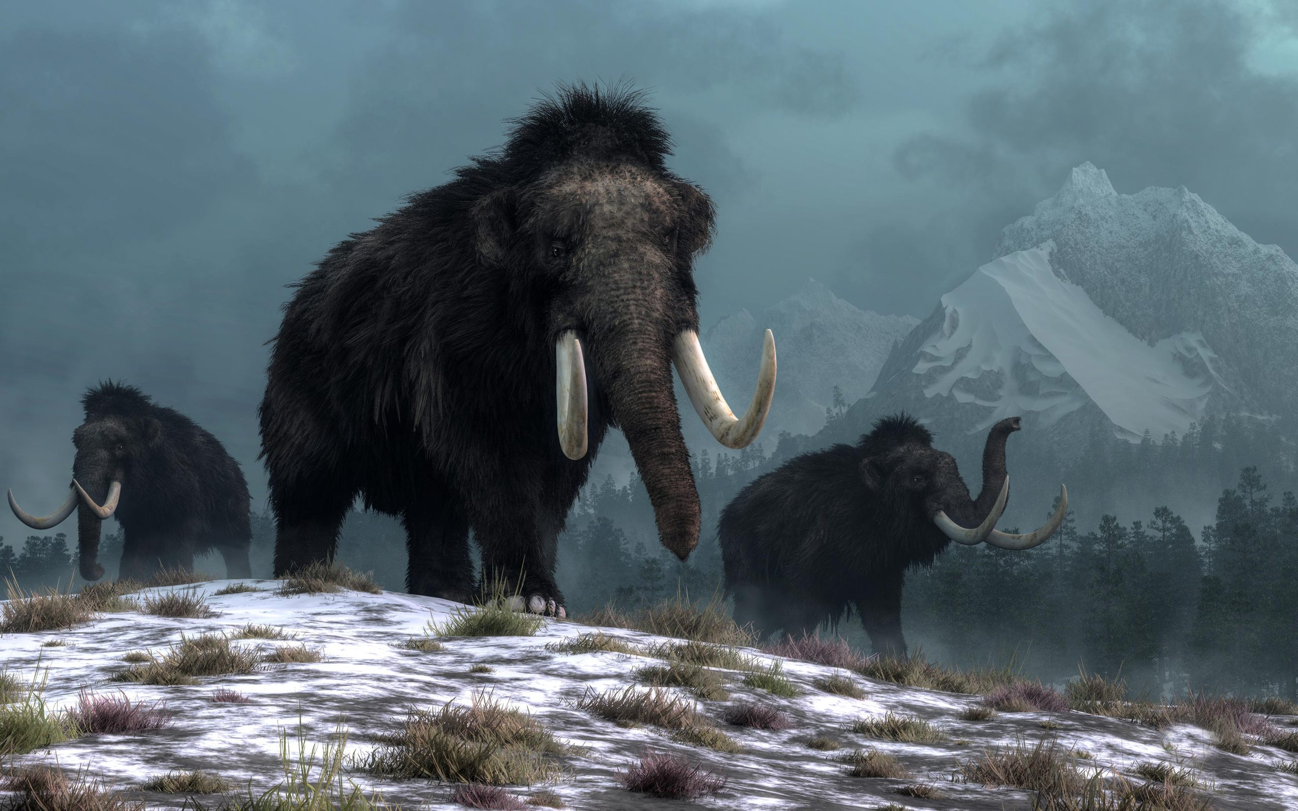 New DNA Research Shows Humans Did Not Cause Woolly Mammoths To Go Extinct – Climate Change Did - SciTechDaily