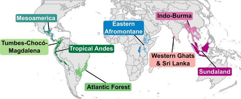 Tropical Biodiversity Hotspots Analyzed