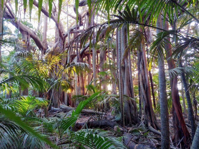 Tropical Forests Threatened Habitats
