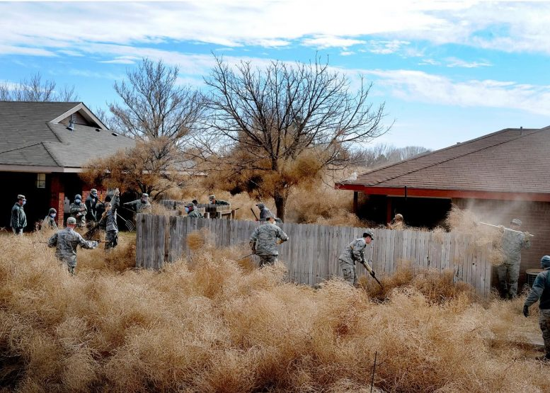 Tumbleweed Invasion