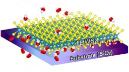 Two-Dimensional Material on a Single-Layer of Tungsten Disulfide