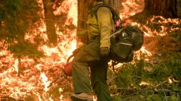 US Forest Service Prescribed Burn