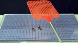 Ultra-Light Robotic Insect