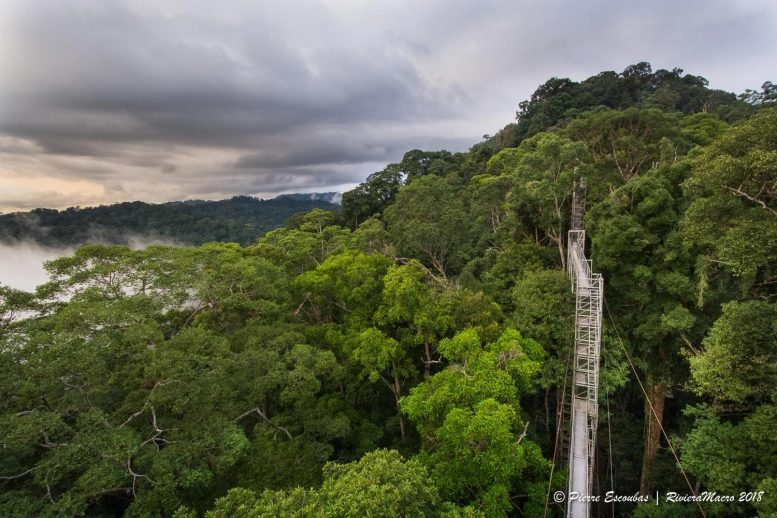 Ulu Temburong National Park in Brunei