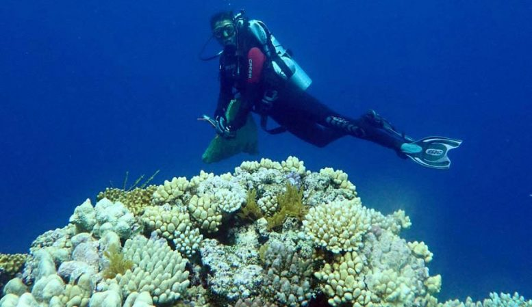 Uncovering New Corals