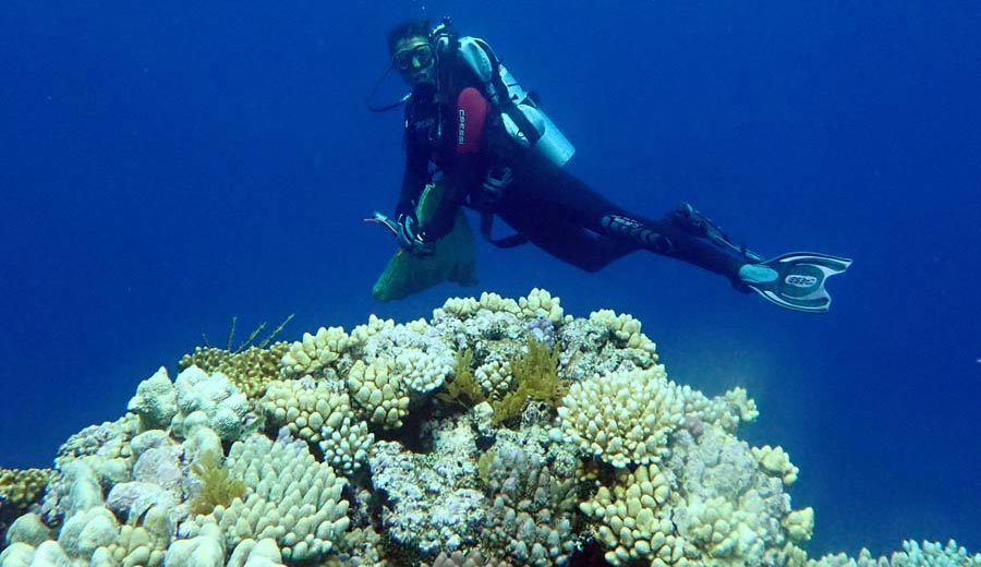 """""""Treasure Trove"""" of New Coral Species Discovered Along the Great Barrier Reef - SciTechDaily"""