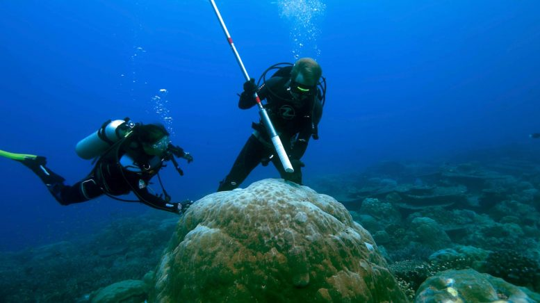 Underwater Coral Drilling Core