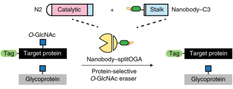 Undruggable Proteins