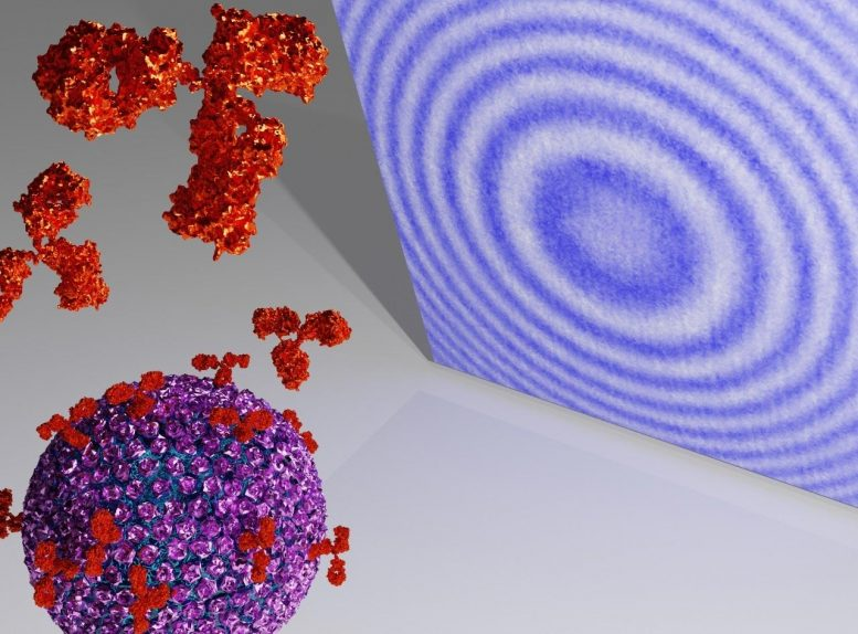 Viruses and Antibodies Holographic Imaging