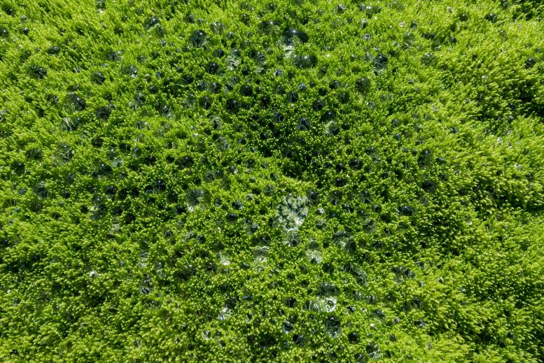 Water Collects on Mosses