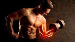 Weight Lifting Bodybuilding Muscle