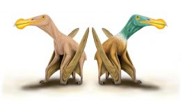 What Pterosaurs Looked Like