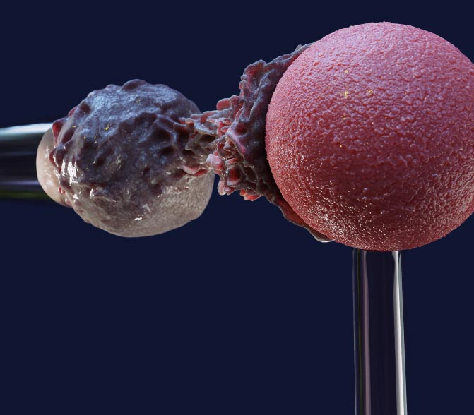 White Blood Cell Protrusion Model