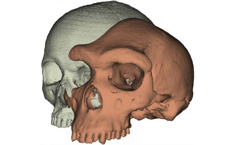 Why Expressive Brows Mattered in Human Evolution
