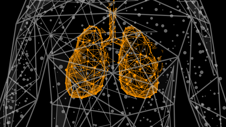 Wireframe Human Lungs