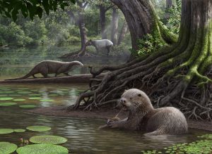 Wolf-Sized Otter Lived About 6 Million Years Ago