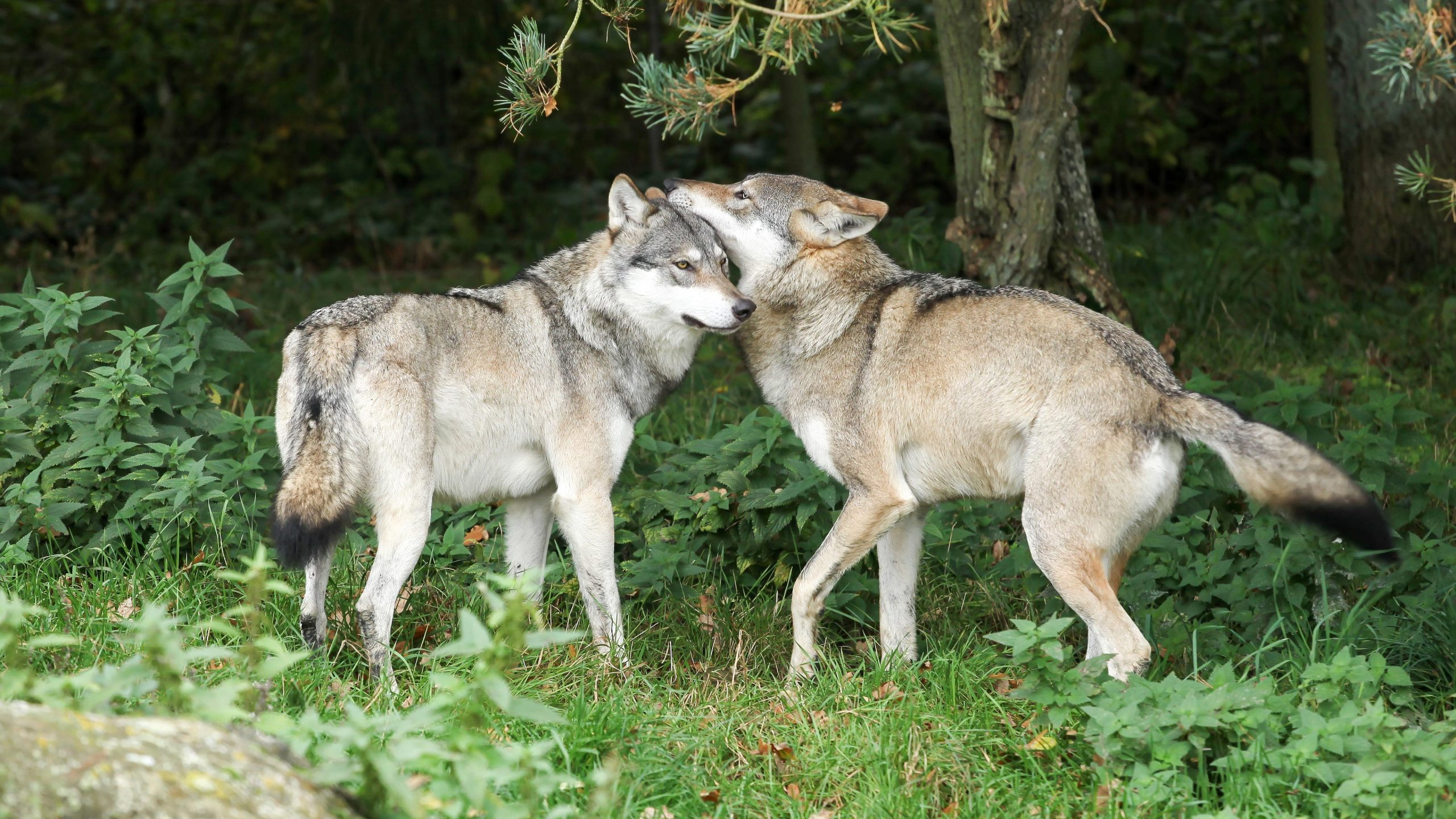 Mating With Relatives? New Research Shows It Is Not a Big Deal in Nature