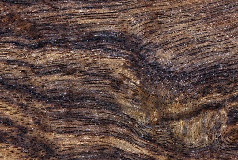 Wood Texture Detail
