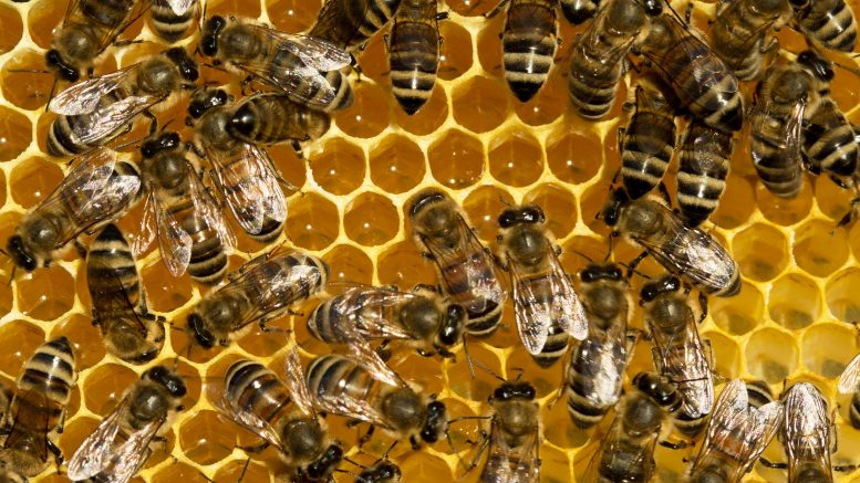 Worker Bees Hive