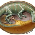 Worlds Oldest Dinosaur Bonebed Reveals How Dinosaur Embryos Grew and Developed