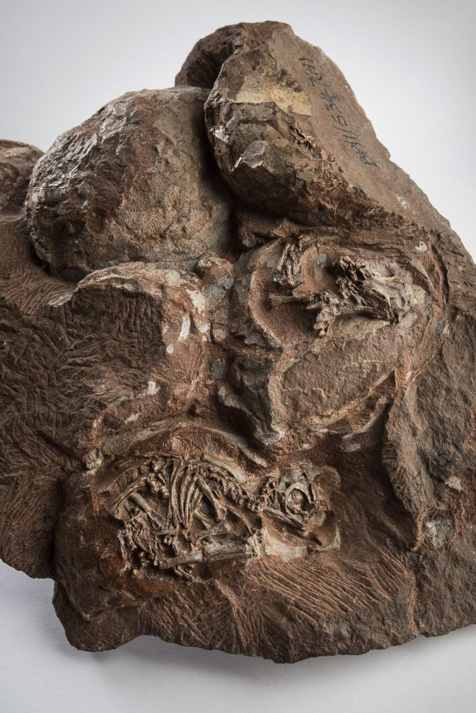 Some of the World's Oldest Known Dinosaur Eggs and Embryos