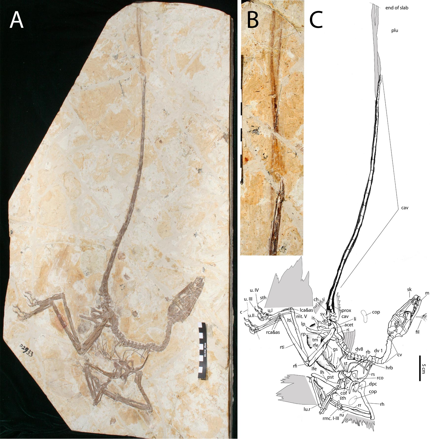 Newly identified dinosaur specimen sheds light on their link with birds