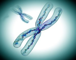 X Chromosome Reactivation Could Treat Rett Syndrome