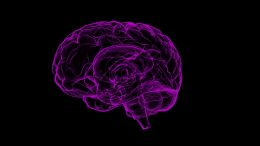 Yale Neuroscientists Can Predict IQ's By Analyzing Neuronal Connections